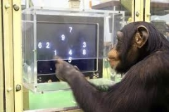 learning chimp